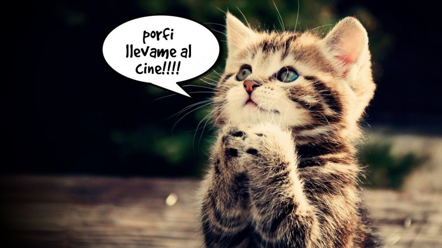 porfi llevame al cine!!!!  | phrase.it