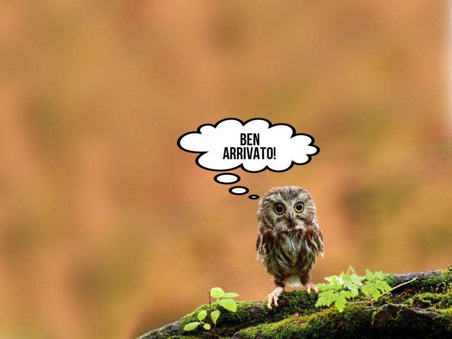 bEN ARRIVATO!  | phrase.it