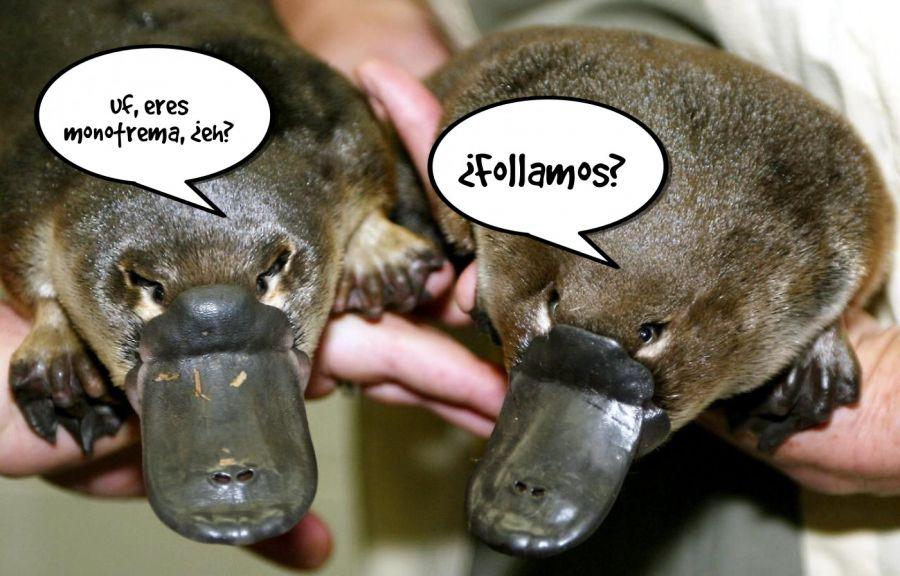 ¿Follamos?  | phrase.it