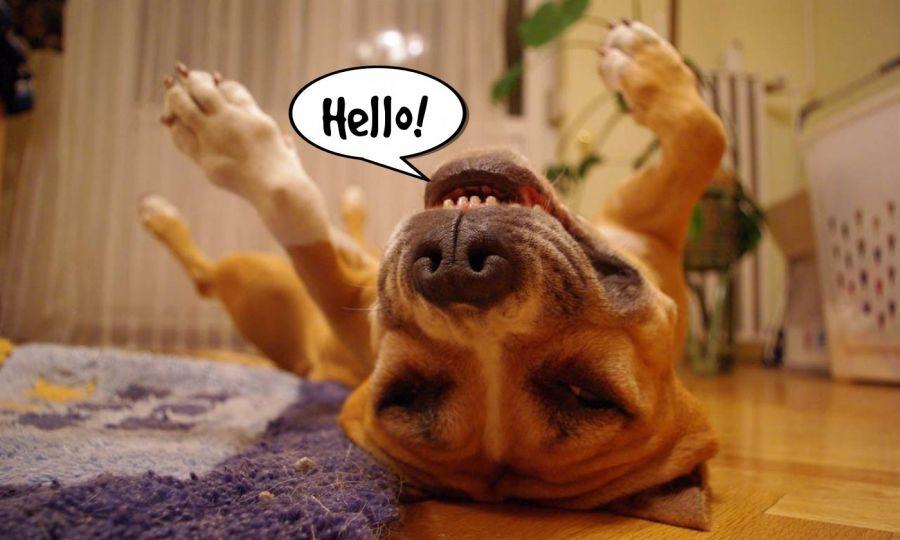 Hello!  | phrase.it