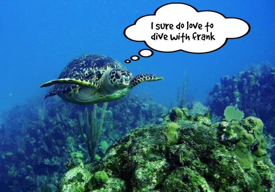 I sure do love to dive with frank  | phrase.it