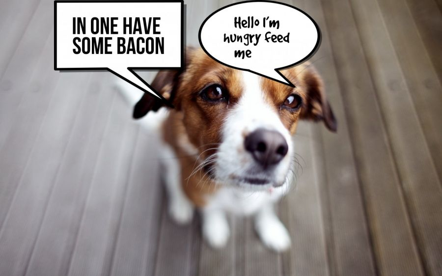 In one have some bacon  | phrase.it