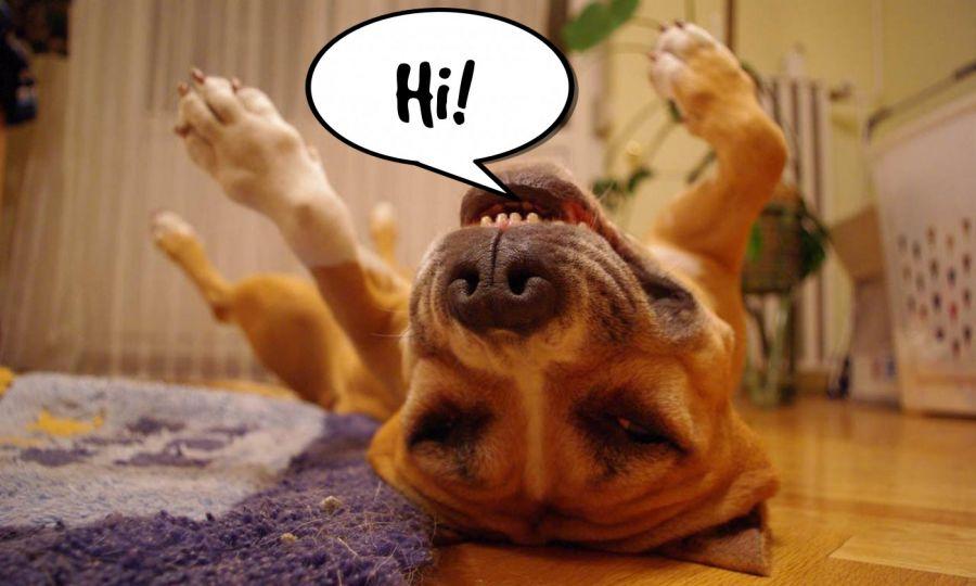 Hi!  | phrase.it