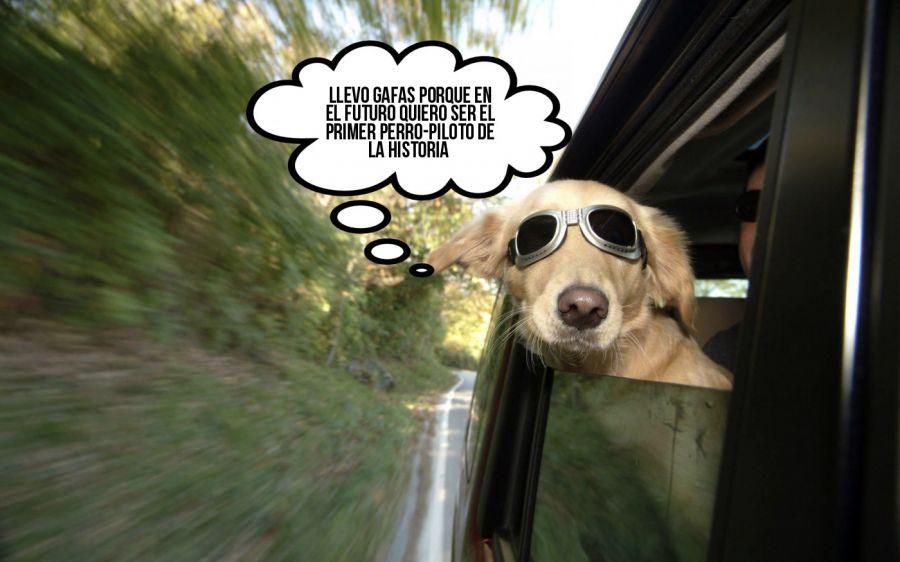 Llevo gafas porque en el futuro quiero ser el primer perro-p... | phrase.it