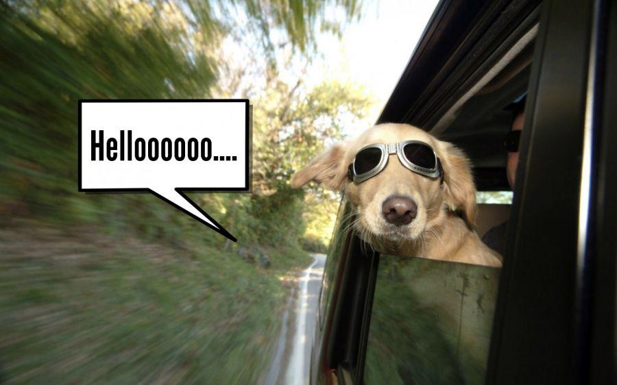 Helloooooo....  | phrase.it