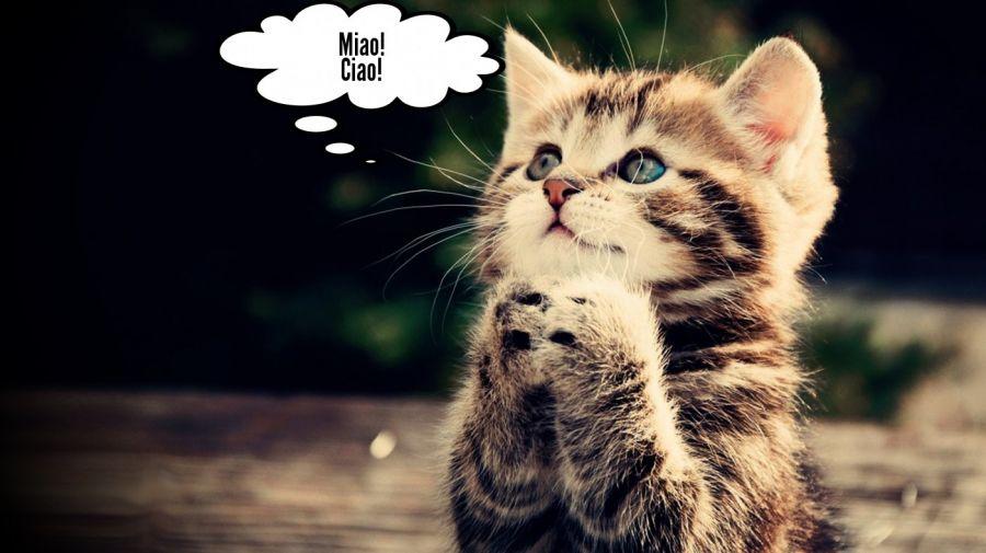 Miao! Ciao!  | phrase.it