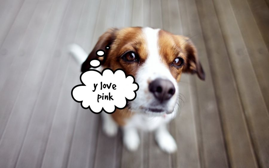 y love pink  | phrase.it
