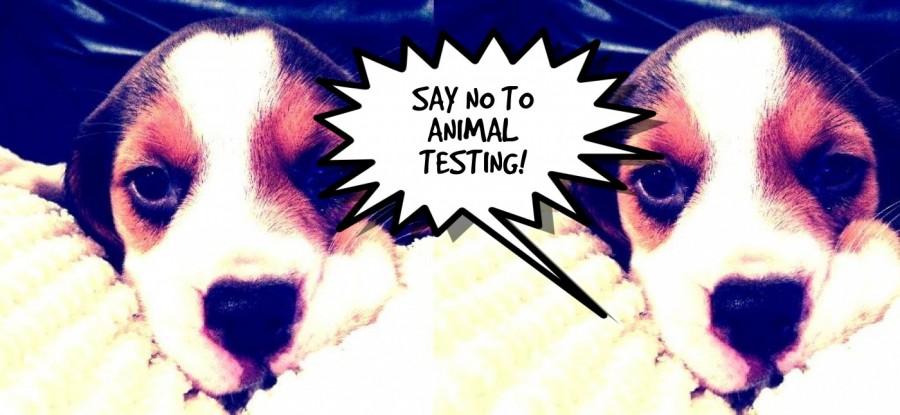 is animal testing necessary essay