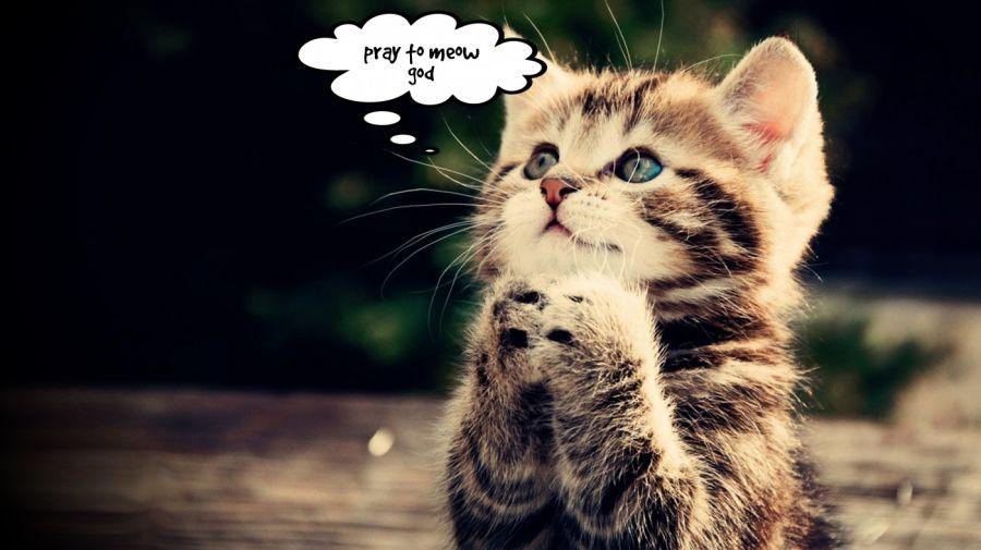 pray to meow god  | phrase.it